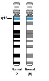 Normal_15_Chromosome